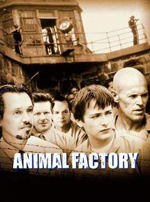 Animal Factory streaming