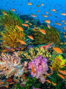 Océans : Notre planète bleue streaming