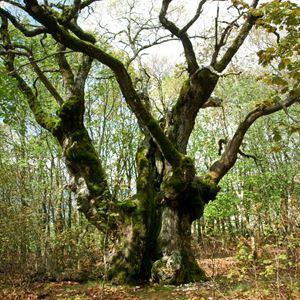 Le Temps des forêts : Photo