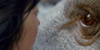 Okja sur Netflix : C'est quoi ce film ?