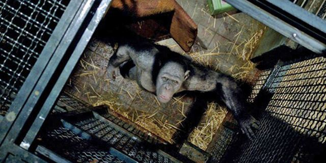 Hier soir à la télé : vous avez aimé La Planète des singes : les origines ? On vous recommande ...