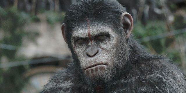 La Planète des singes : l'affrontement sur W9 : comment fait-on pour incarner un primate ?