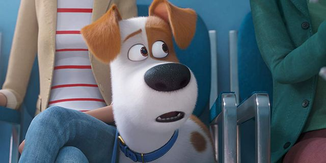 Bande-annonce Comme des bêtes 2 : séance chez le véto pour un chat hystérique, un hamster dépressif et un chien bipolaire