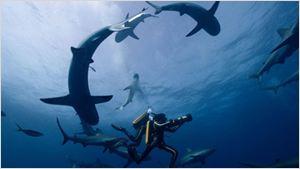 L'Odyssée - Plonger avec les requins : Pierre Niney se confie sur cette expérience à part