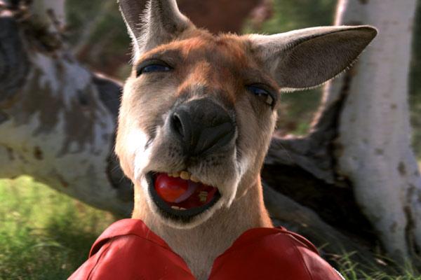 photo drole kangourou