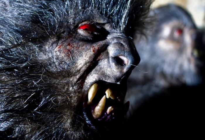 Lobos de Arga : Photo