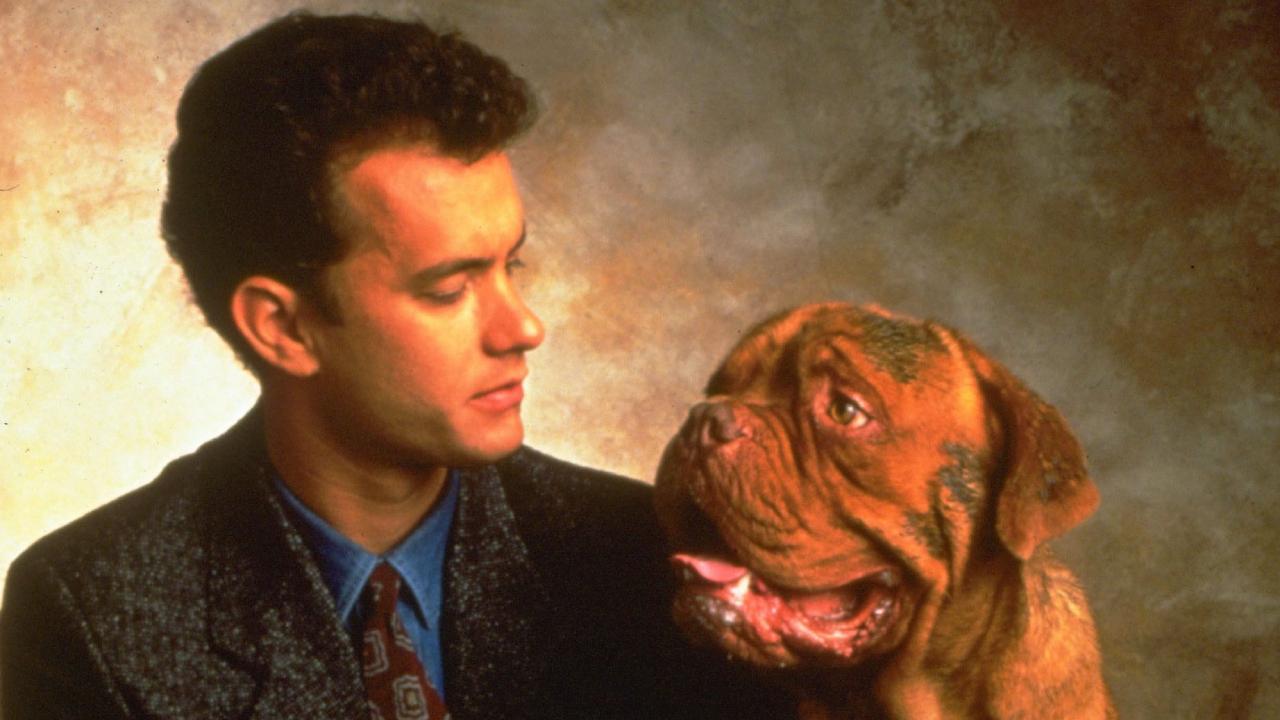 Turner et Hooch sur Disney+: star du film des années 80, Tom Hanks apparaît-il dans la série?
