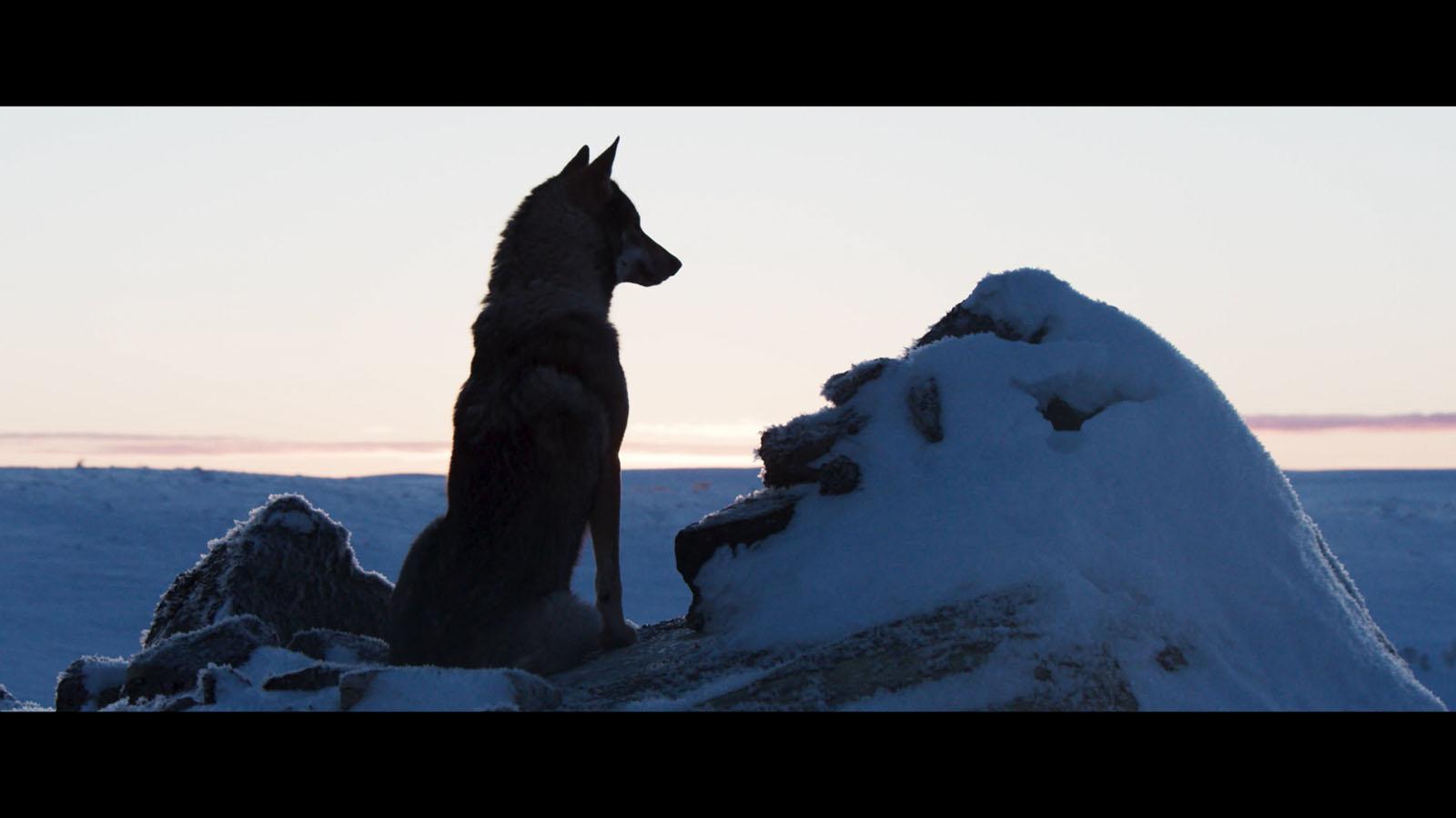 Aïlo : une odyssée en Laponie DVDRip Télécharger