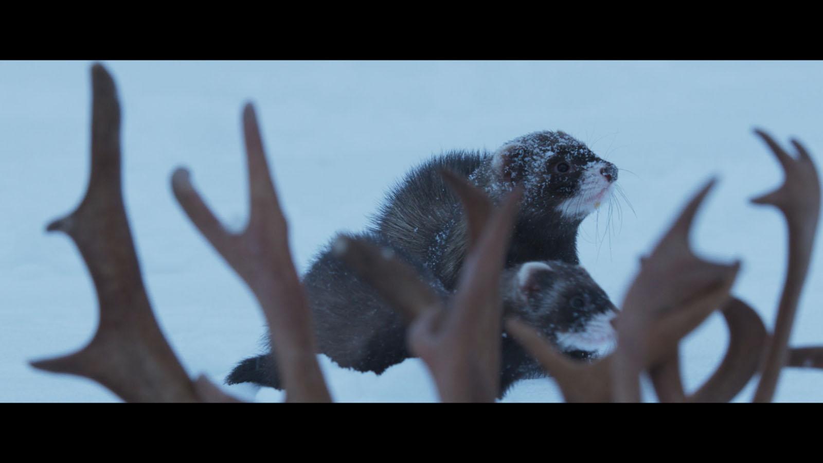 Aïlo : une odyssée en Laponie DVDRip