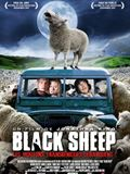 Photo : Black Sheep