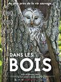 Photo : Dans les bois
