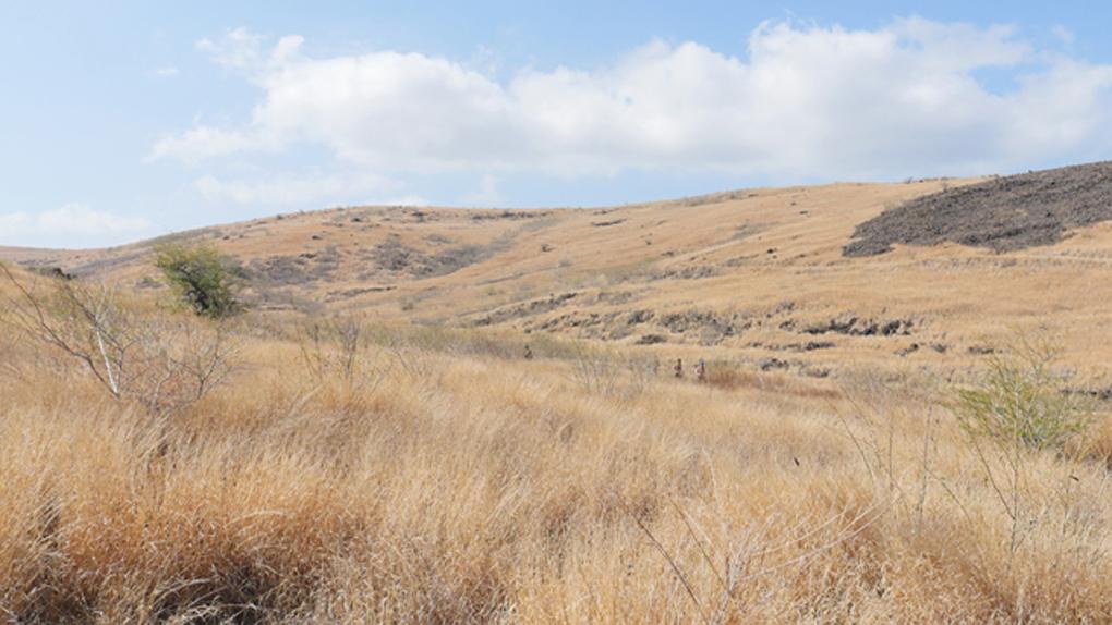 La vaste et aventureuse savane du Cap La Houssaye