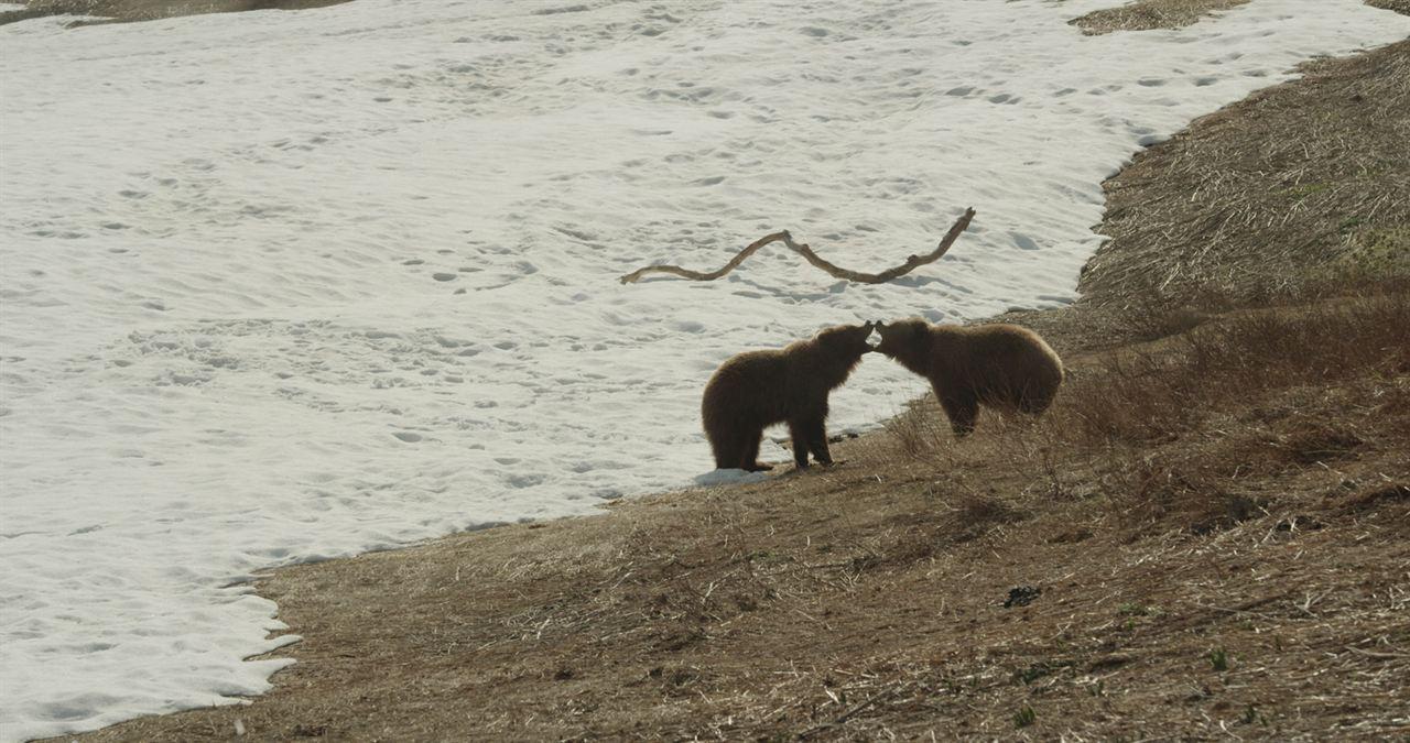 Terre des Ours : Photo