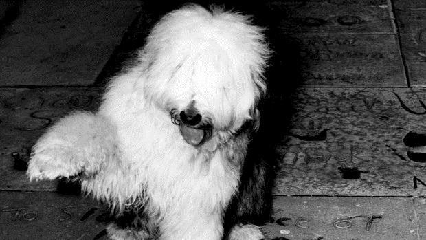 Quelle vie de chien : Photo
