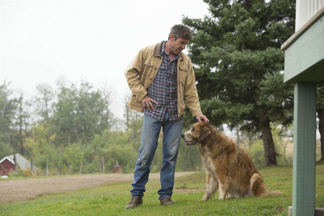 Mes vies de chien : Photo Dennis Quaid