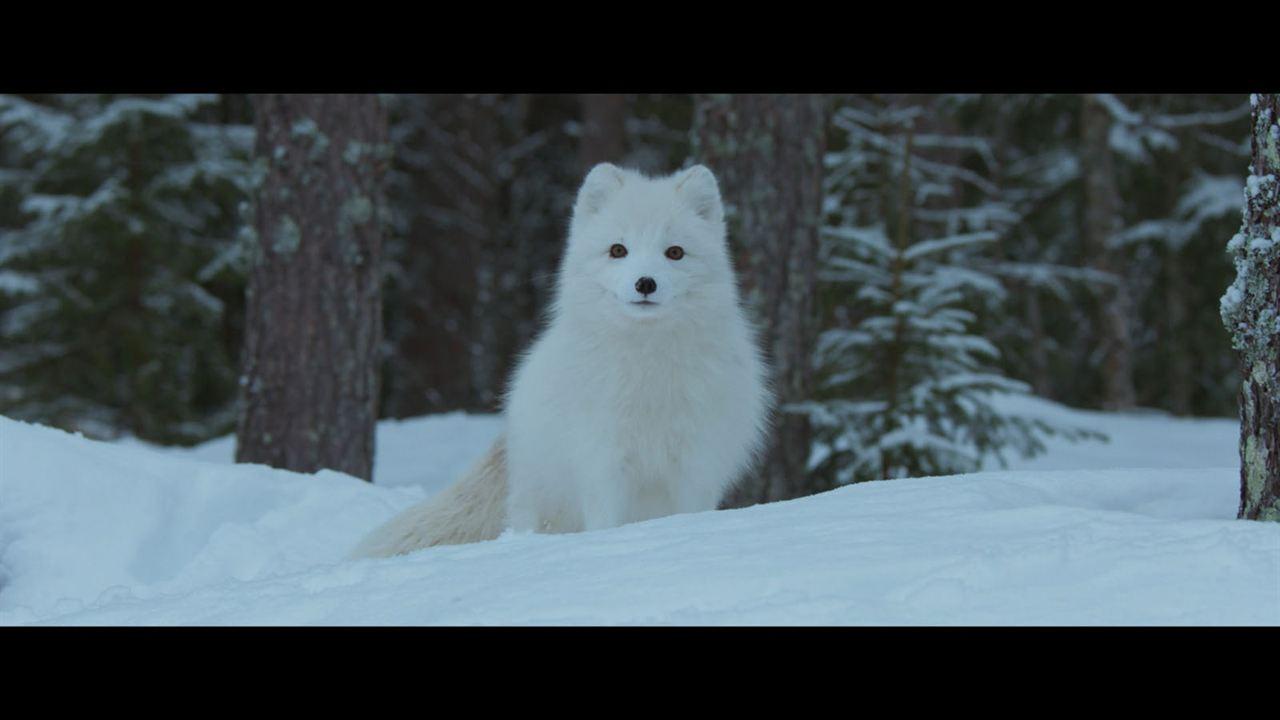 Aïlo : une odyssée en Laponie : Photo