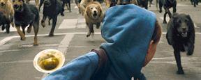 Bande-annonce White God : quand les chiens errants se révoltent contre les hommes
