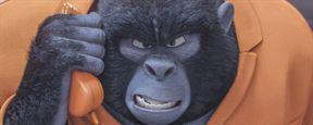 Tous en scène : découvrez le gorille fan de Sam Smith