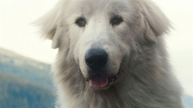 Trailer du film belle et s bastien l 39 aventure continue belle et s bas - Thylane blondeau taille ...