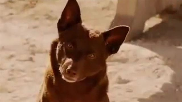 Red Dog Bande-annonce VO