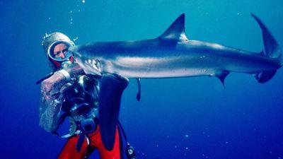 """Face aux requins sur Disney+ : """"Valerie Taylor, c'est un peu votre Commandant Cousteau en France"""""""