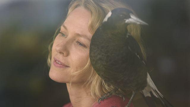 Penguin Bloom sur Netflix : l'inspirante histoire vraie du film avec Naomi Watts