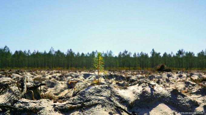 Photo 1 pour Le Temps des forêts