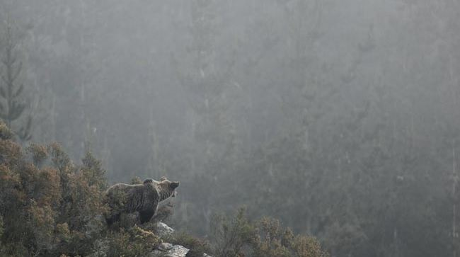 Photo du film Ours simplement sauvage