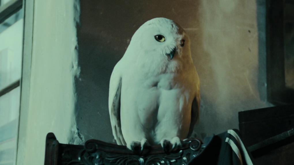 À qui appartient la chouette Hedwige ?